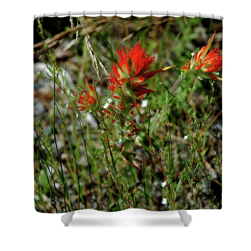 Usa Shower Curtain featuring the photograph Wild Paint Brush by LeeAnn McLaneGoetz McLaneGoetzStudioLLCcom