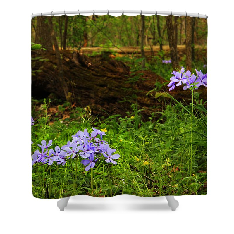Wild Phlox Shower Curtain featuring the photograph Wild Phlox In The Woodlands by Greg Matchick