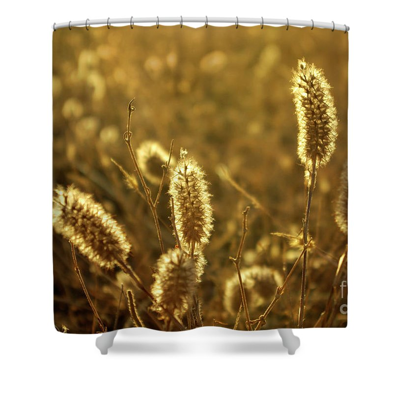 Agricultural Shower Curtain featuring the photograph Wild Spikes by Carlos Caetano