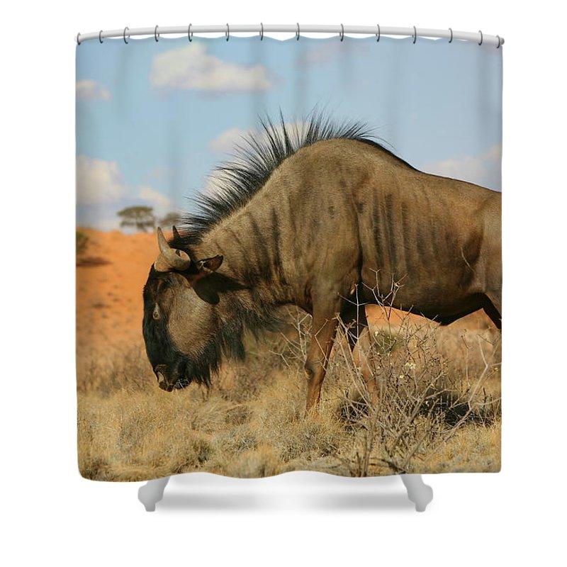 Wildebeest Shower Curtain featuring the photograph Wildebeest by Bruce J Robinson