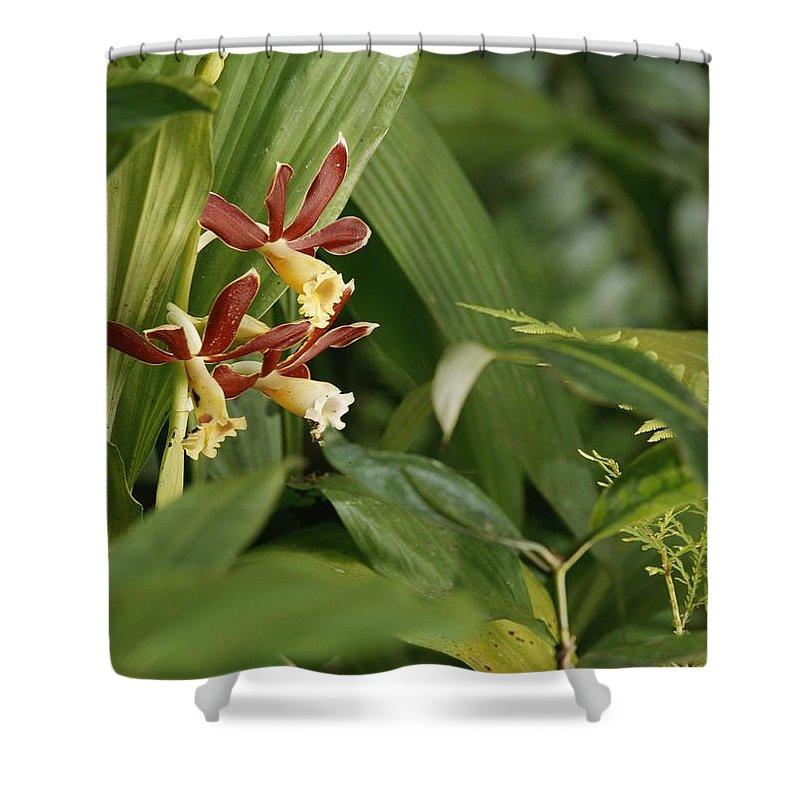 Plants Shower Curtain featuring the photograph Wildflowers by Mattias Klum