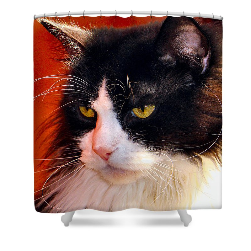 Cat Shower Curtain featuring the photograph Willow Deep Thought by Art Dingo