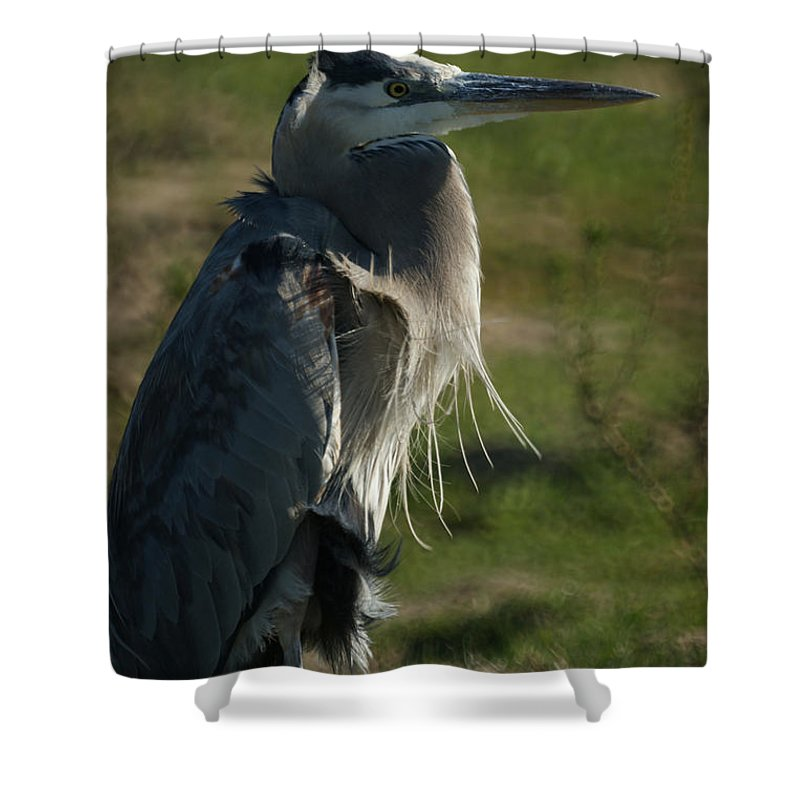 Animals Shower Curtain featuring the photograph Wind Blown Great Blue Heron by Ernie Echols