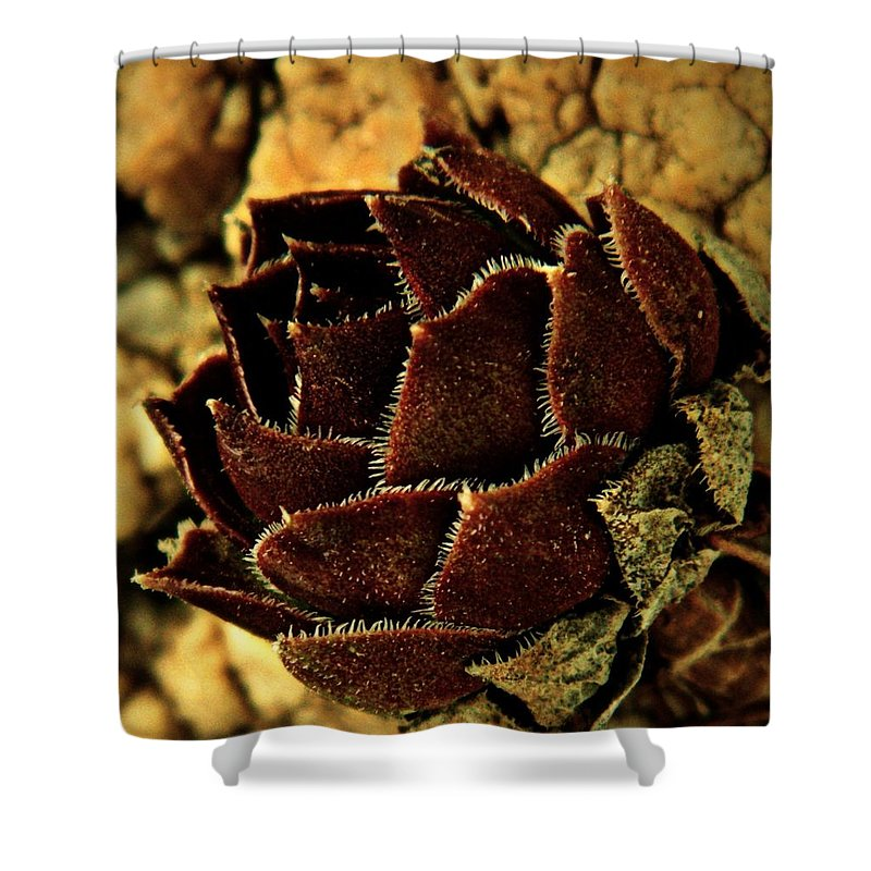 Earthy Shower Curtain featuring the photograph Winter Chick by Chris Berry