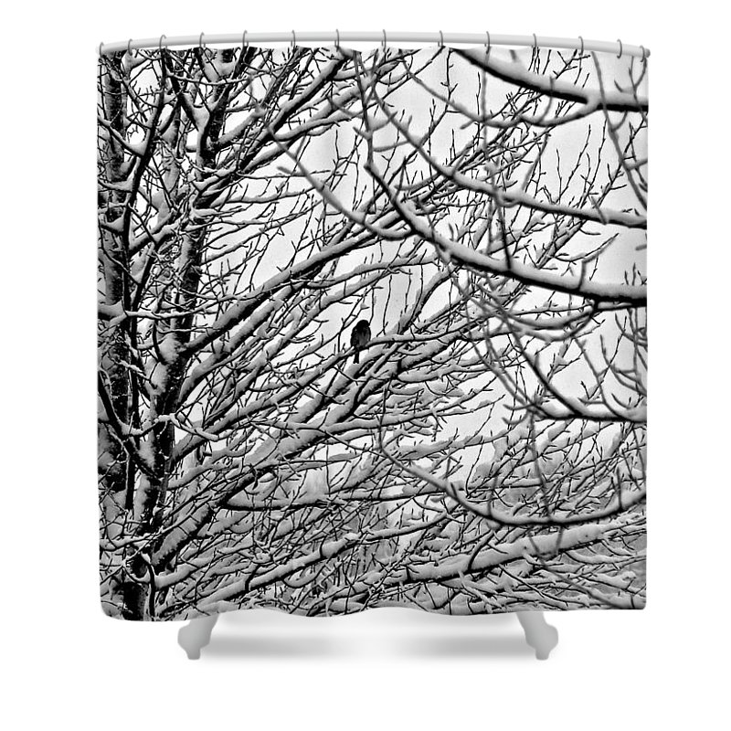 Chickadee Shower Curtain featuring the photograph Winter Chickadee by Eric Tressler