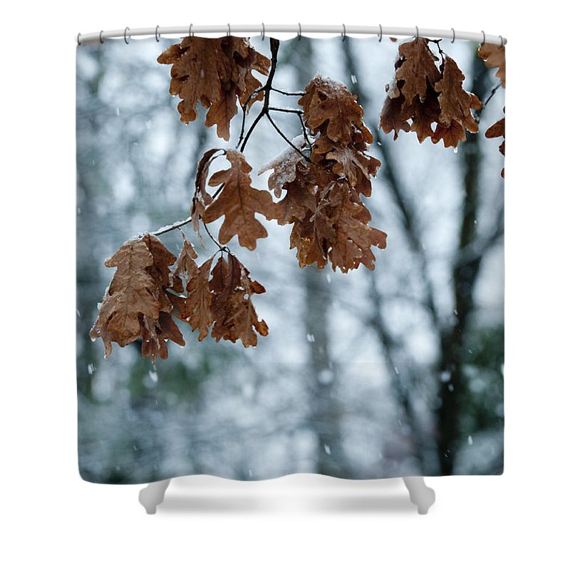 Sandra Bronstein Shower Curtain featuring the photograph Winter Takes Hold by Sandra Bronstein