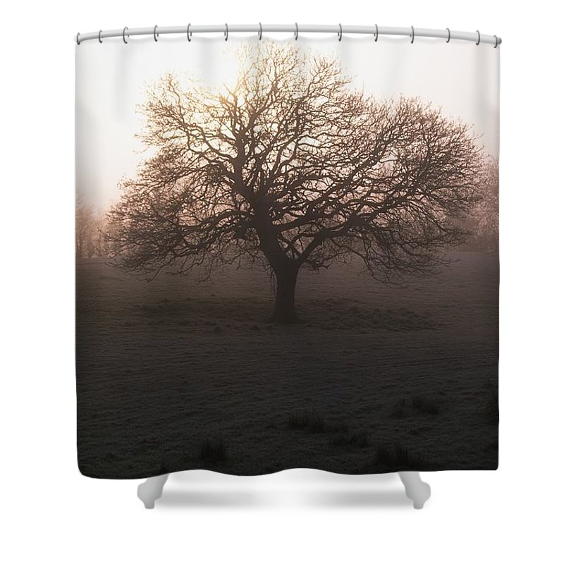 Ireland Shower Curtain featuring the photograph Winter Tree On A Frosty Morning, County by Gareth McCormack