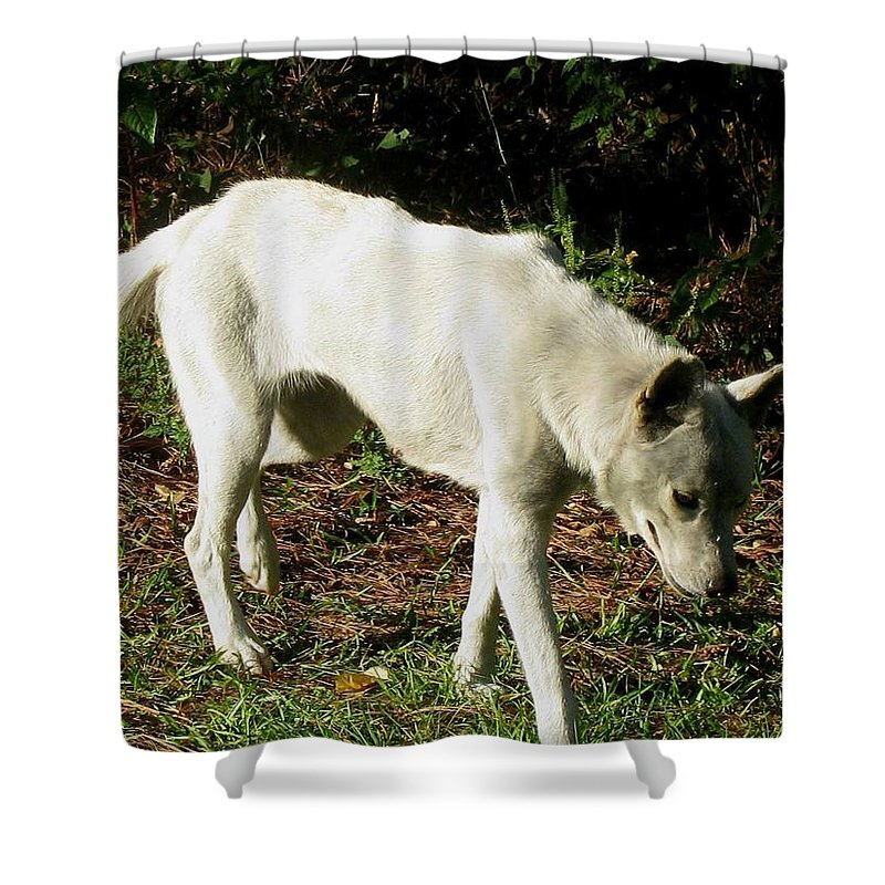 Wolf Shower Curtain featuring the photograph Wolf 2 by Maria Urso