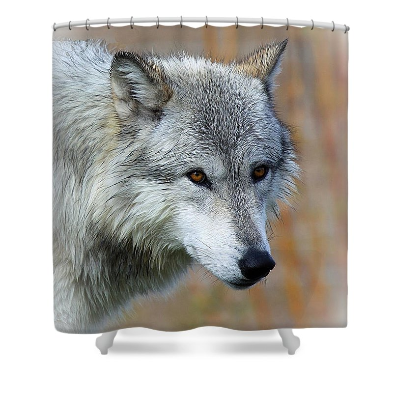 Wolf Profile Shower Curtain featuring the photograph Wolf Profile by Steve McKinzie