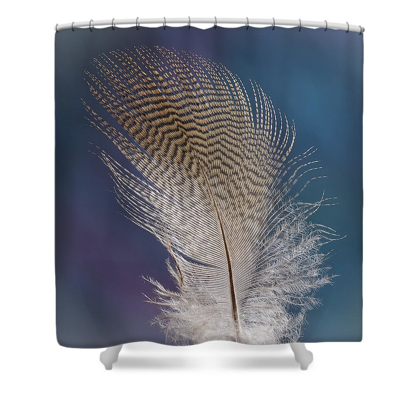 Jean Noren Shower Curtain featuring the photograph Wood Duck Down by Jean Noren