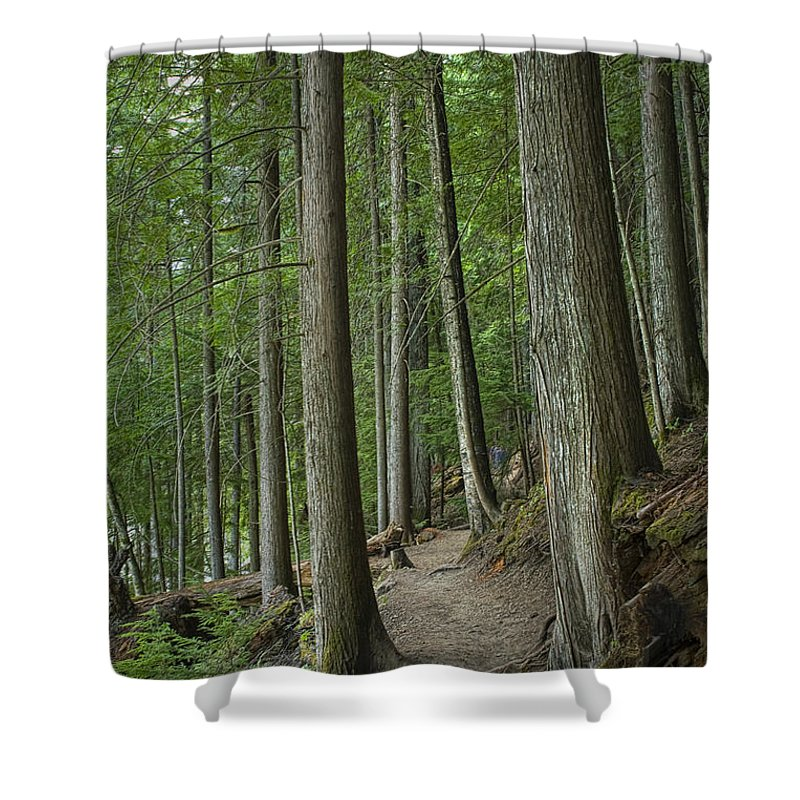 Art Shower Curtain featuring the photograph Woodland Forest Path by Randall Nyhof