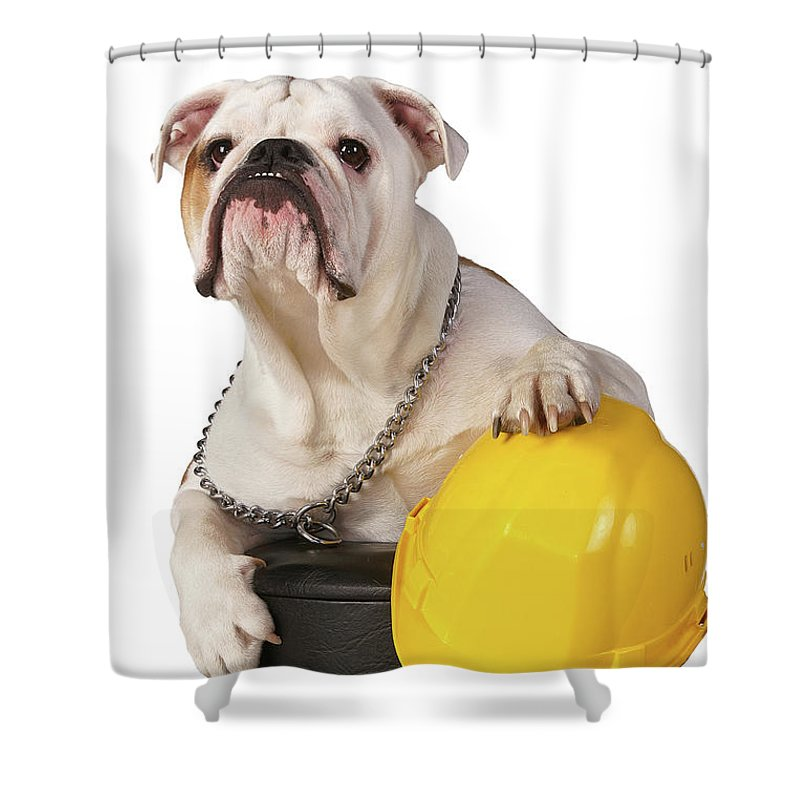 Dog Shower Curtain featuring the photograph Working Like A Dog by Erik Tanghe