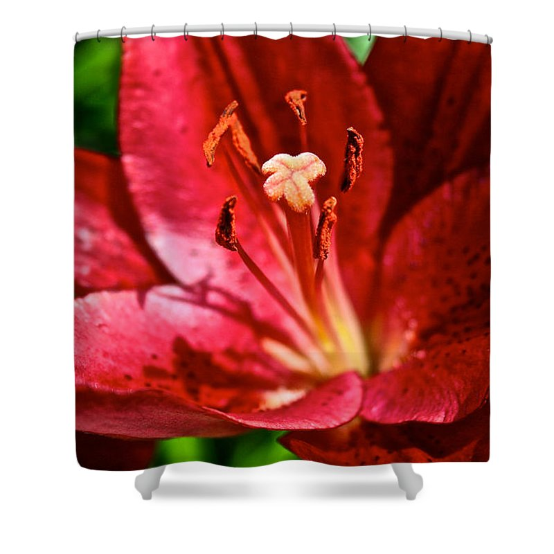 Garden Shower Curtain featuring the photograph X Marks The Spot by Susan Herber