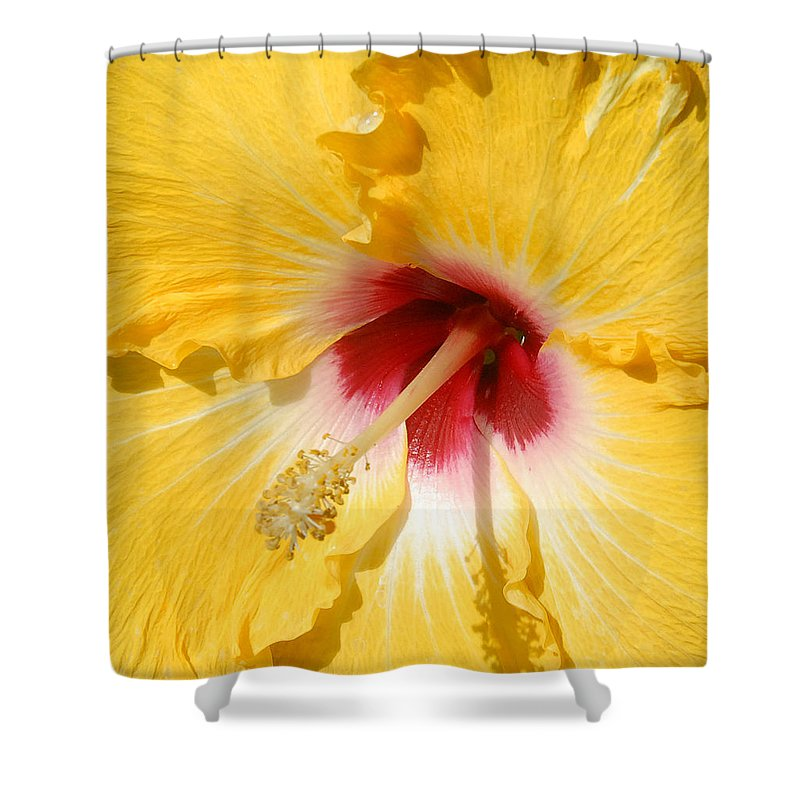 Flora Shower Curtain featuring the photograph Yellow Fellow by Cindy Manero