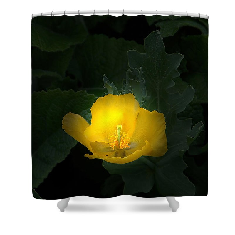 Yellow Shower Curtain featuring the photograph Yellow Flower Against Green by Mike Nellums