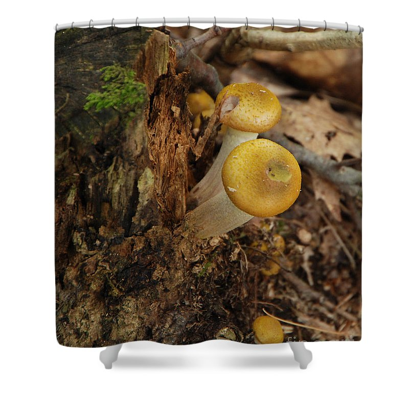 Mushrooms Shower Curtain featuring the photograph Yellow Mushrooms by Grace Grogan
