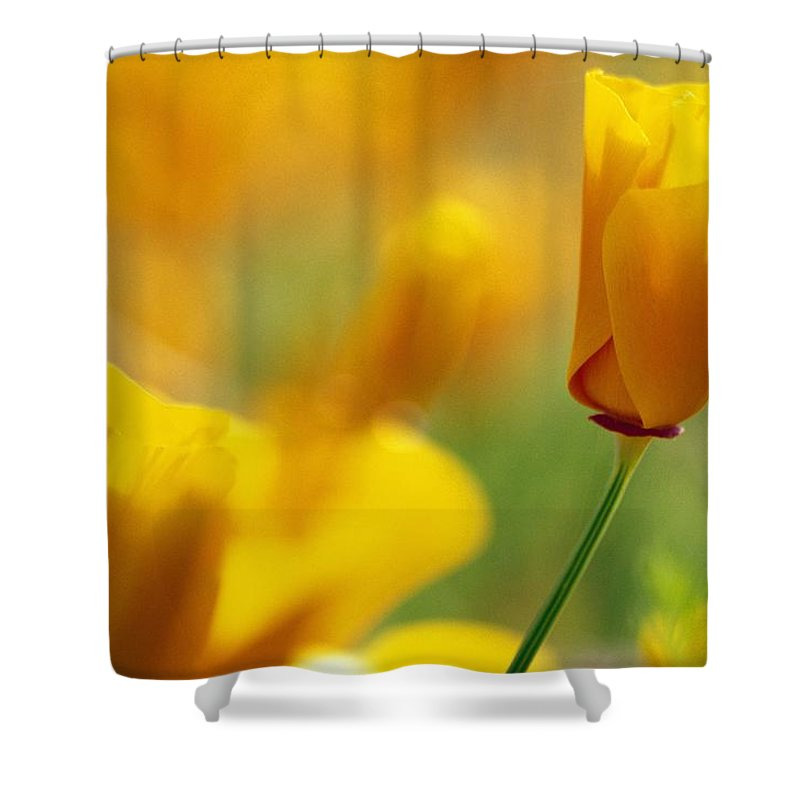 Outdoors Shower Curtain featuring the photograph Yellow Poppy by Natural Selection Craig Tuttle