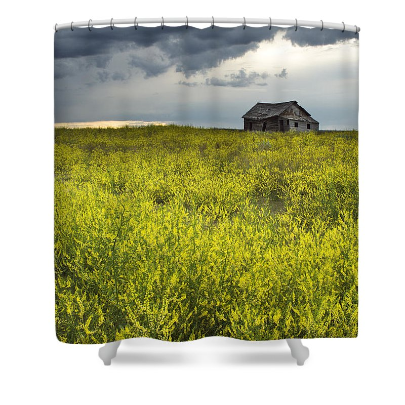 Light Shower Curtain featuring the photograph Yellow Sweet Clover Melilotus by Darwin Wiggett