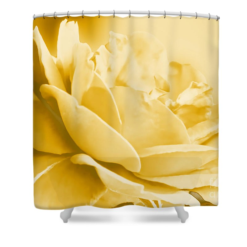 Nature Shower Curtain featuring the photograph Yellow Tone Rose by Debbie Portwood