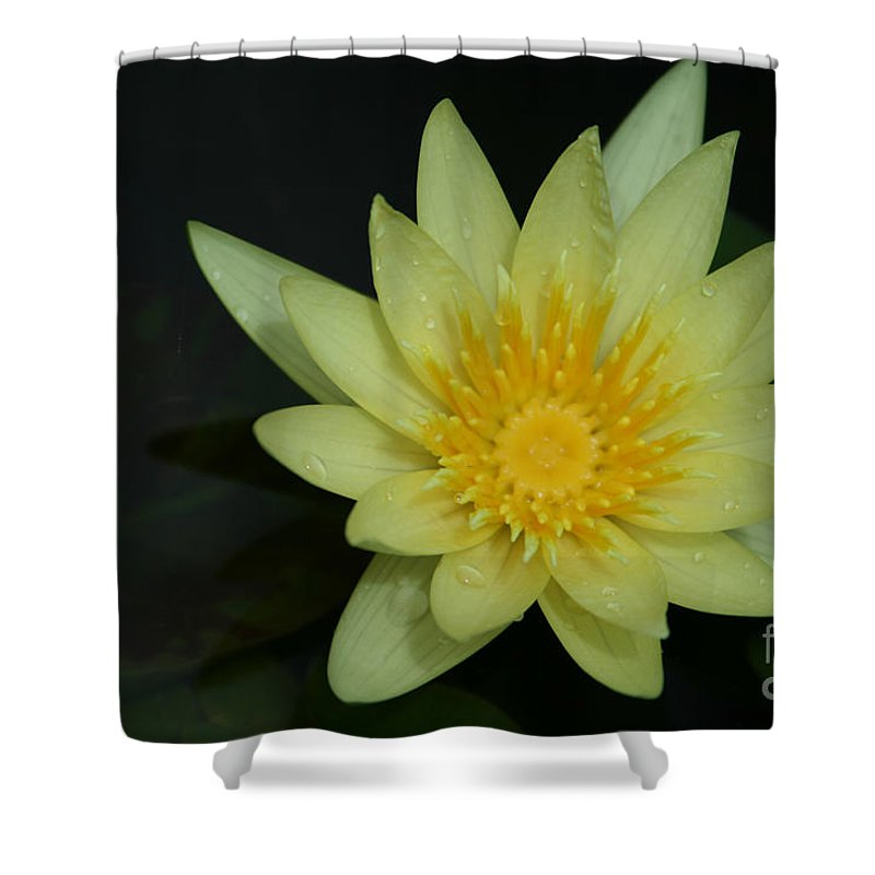 Aloha Shower Curtain featuring the photograph Yellow Waterlily - Nymphaea Mexicana - Hawaii by Sharon Mau