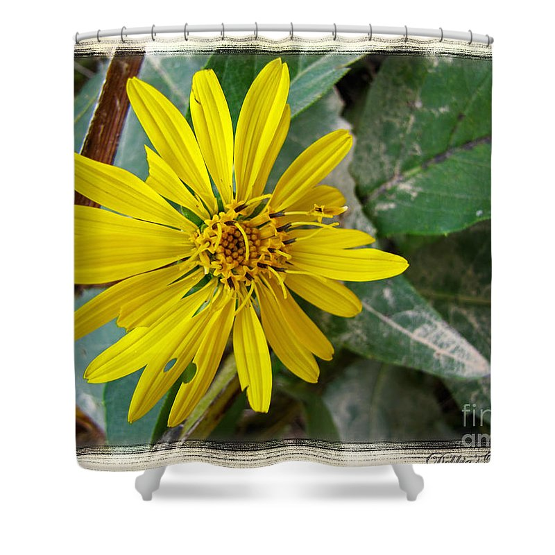 Nature Shower Curtain featuring the photograph Yellow Wildflower by Debbie Portwood