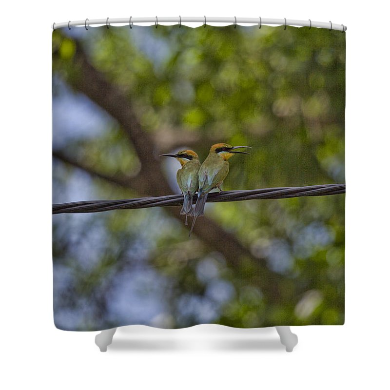 Rainbow Bee-eaters Shower Curtain featuring the photograph You Watch My Back And I Will Watch Yours by Douglas Barnard