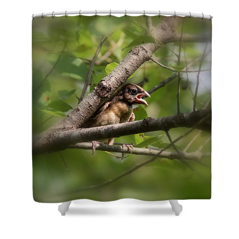 Blue Grosbeak Shower Curtain featuring the photograph Young And Scared by Travis Truelove