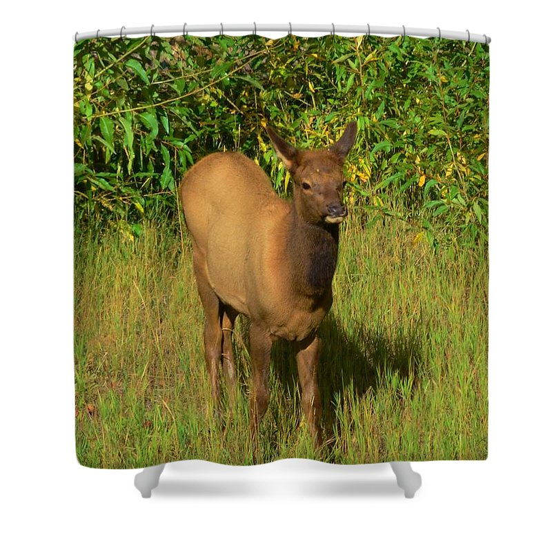 Young Shower Curtain featuring the photograph Young Elk by Kathleen Struckle