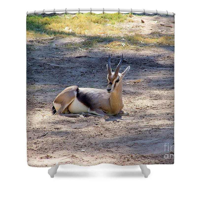 Ibex Shower Curtain featuring the photograph Young Ibex by Mary Deal