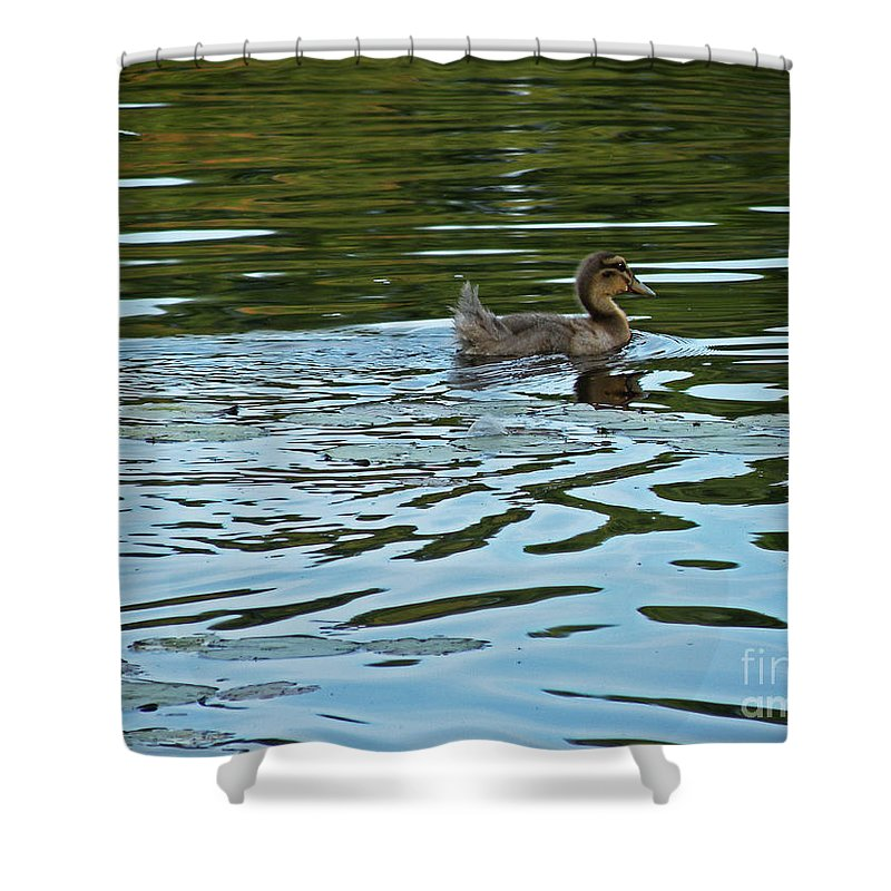 Scott Shower Curtain featuring the photograph Young Male Garganey by Scott Hervieux