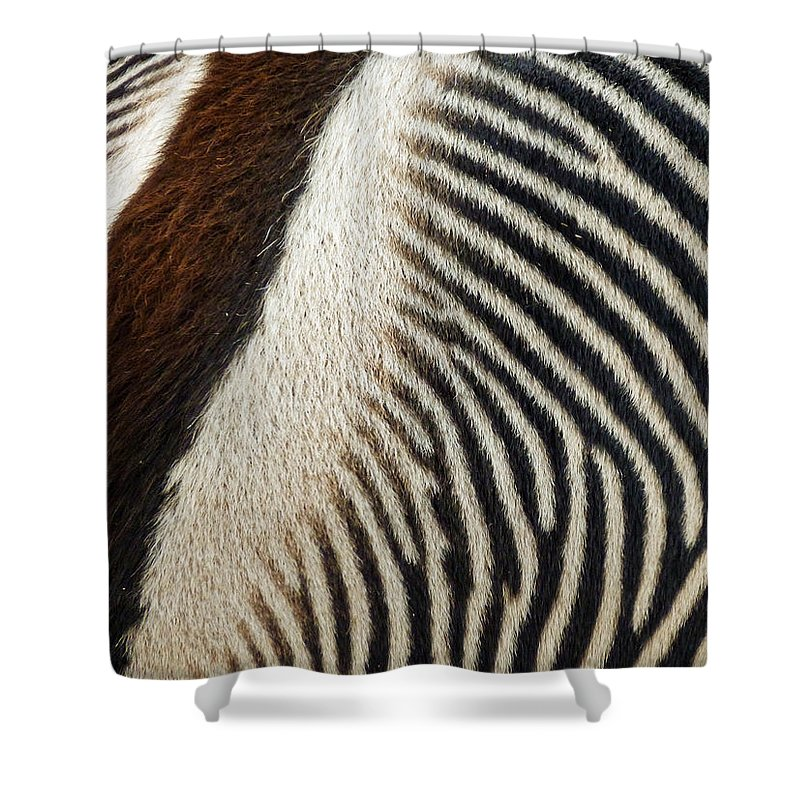 Zebra Caboose Shower Curtain featuring the photograph Zebra Caboose by Methune Hively