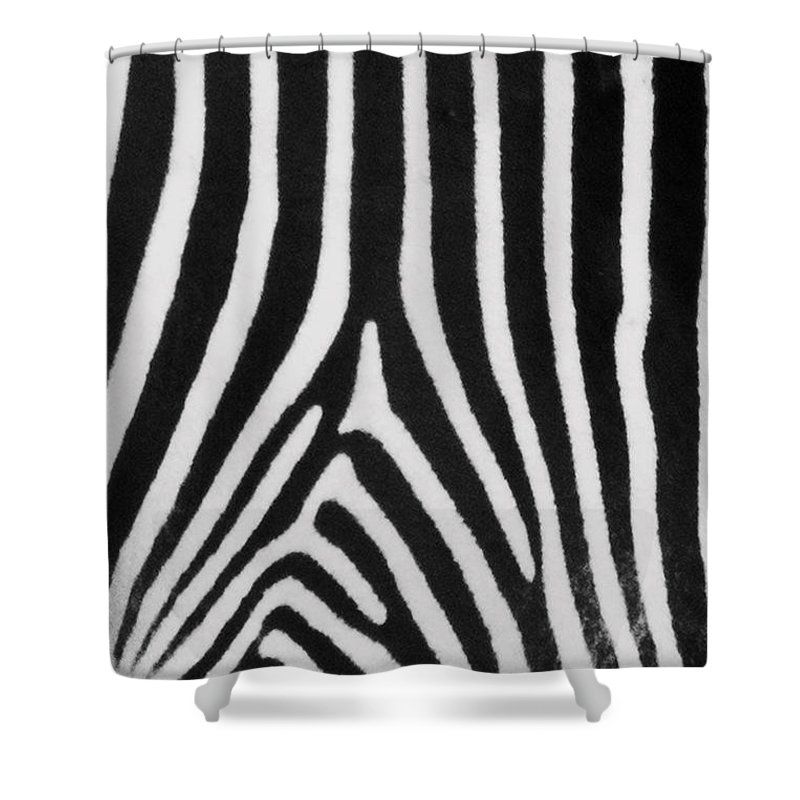 Zebra Shower Curtain featuring the photograph Zebra Stripes by David Pringle