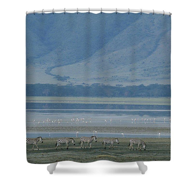 Africa Shower Curtain featuring the photograph Zebras And Pink Flamingos, Ngorongoro by Skip Brown