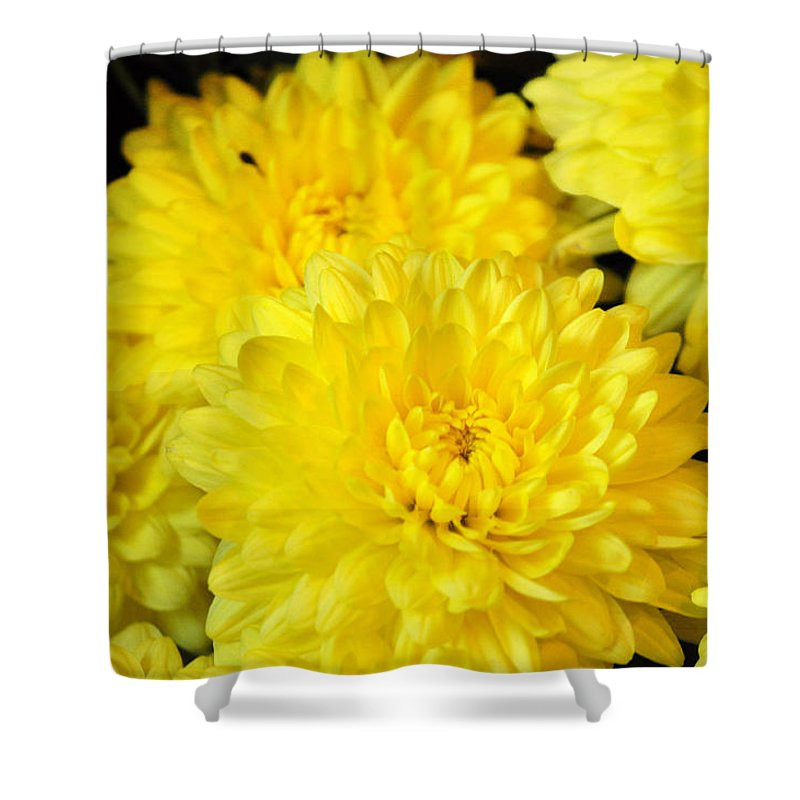 A Yellow Chrysanthemum Symbolizes Slighted Love Shower Curtain For