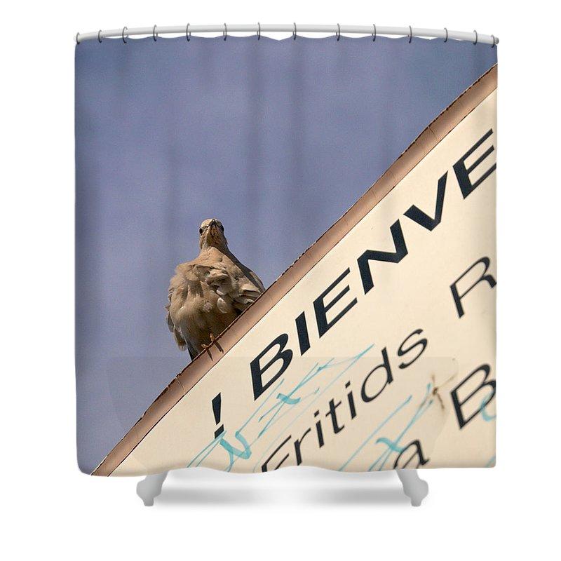 Lehtokukka Shower Curtain featuring the photograph African Collared Dove 2 by Jouko Lehto