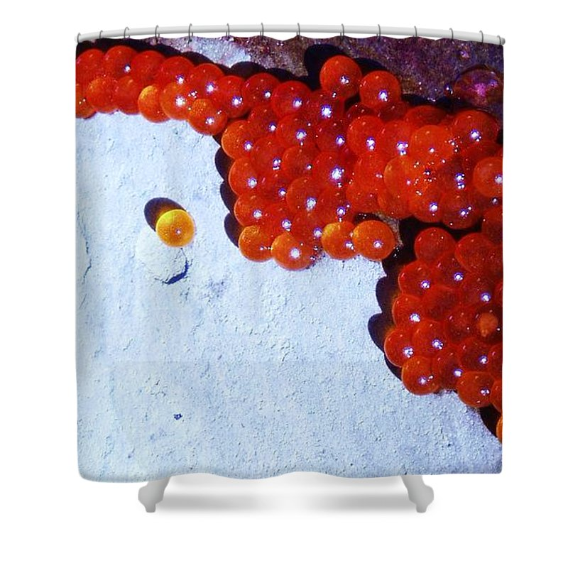 Photograph Fish Egg Lake Water Rock Shower Curtain featuring the photograph Don't Kill Me. by Seon-Jeong Kim