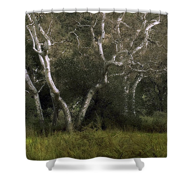 Tree Shower Curtain featuring the photograph Dv Creek Trees by Karen W Meyer