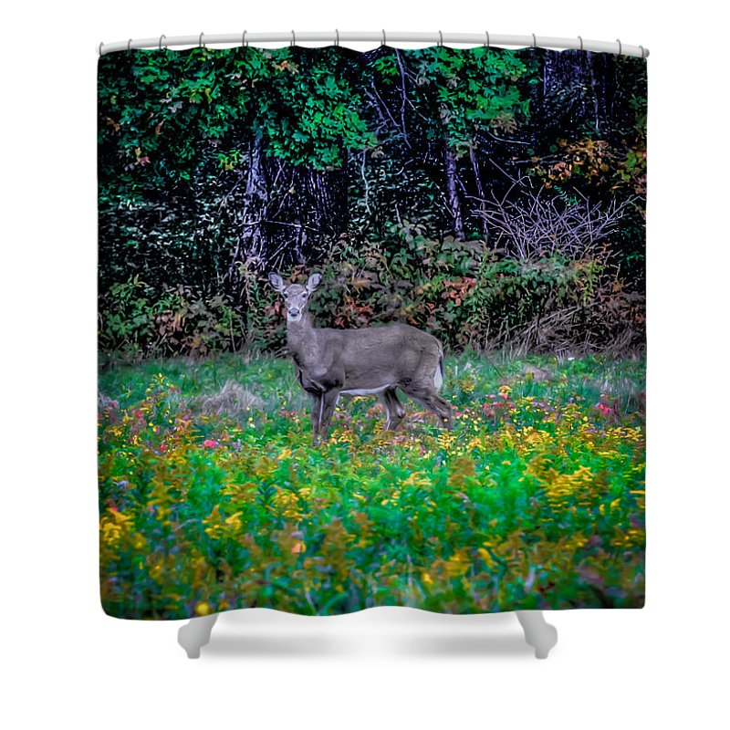 Shower Curtain featuring the photograph Evening Out by David Henningsen