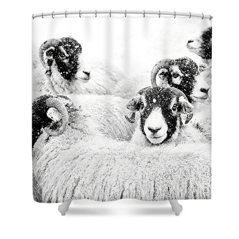 Swaledale Shower Curtain featuring the photograph In Winters Grip by Janet Burdon