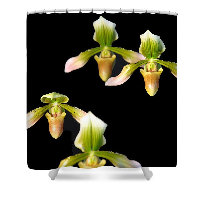 Music Shower Curtain featuring the photograph Orchid Quads by Vijay Sharon Govender