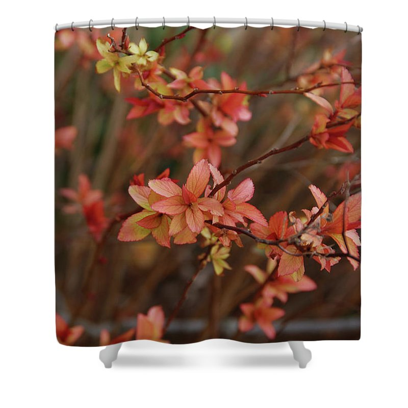Gardens Shower Curtain featuring the photograph Spirea 1280 by Guy Whiteley