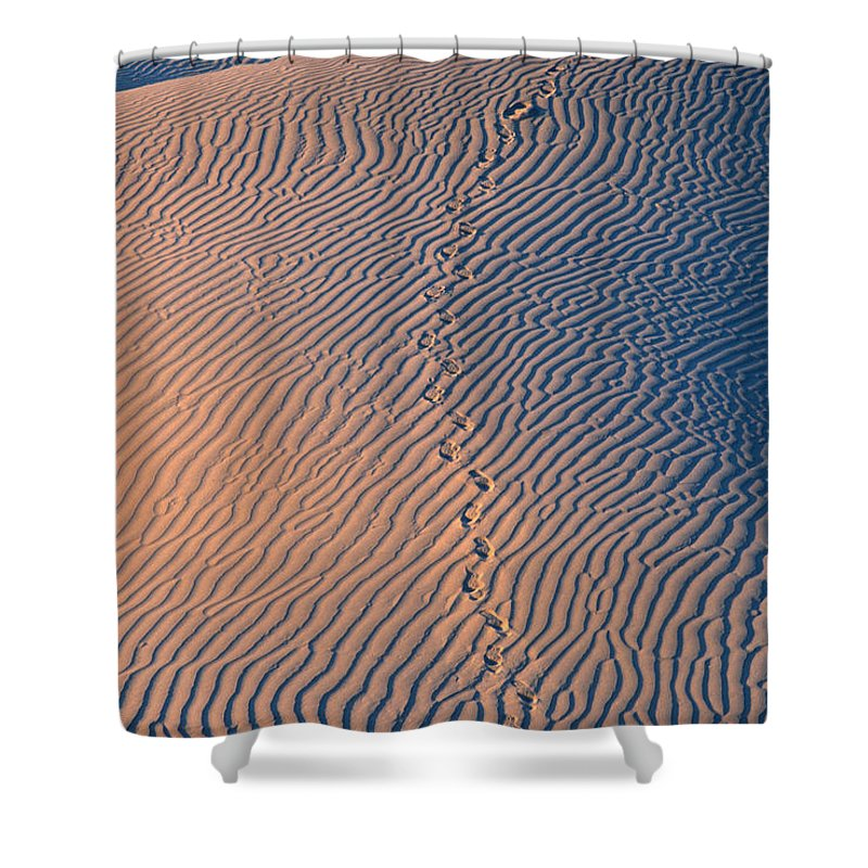 Death Valley National Park Shower Curtain featuring the photograph Tracks At First Light In Death Valley by Sandra Bronstein