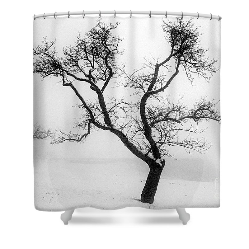 Empty Shower Curtain featuring the photograph Tree In The Snow by Ilan Amihai