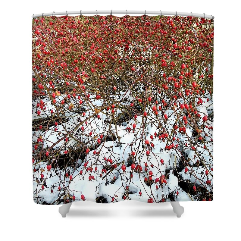 Winter Shower Curtain featuring the photograph Winter Harvest 2 by Will Borden