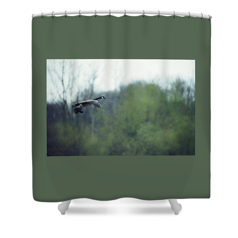Canada Goose Shower Curtain featuring the photograph 070406-40 by Mike Davis