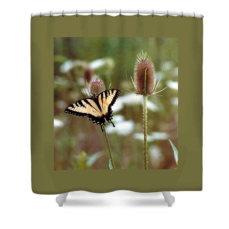 Butterfly Shower Curtain featuring the photograph 070406-84 by Mike Davis