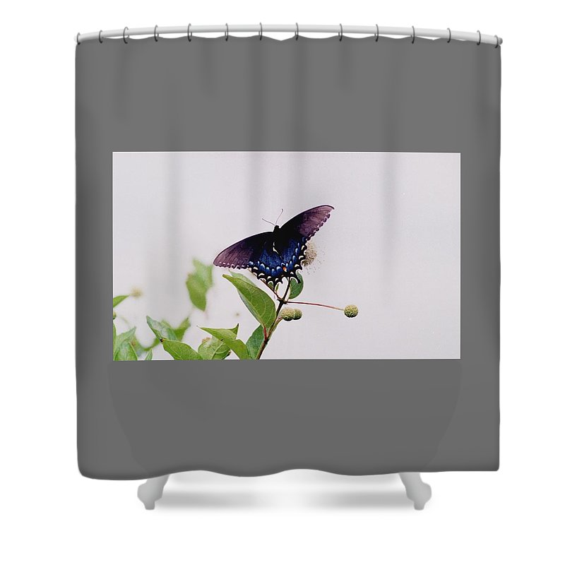 Butterfly Shower Curtain featuring the photograph 080706-5 by Mike Davis