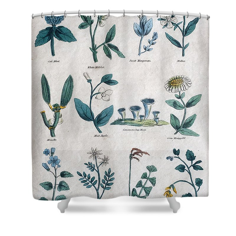 Natural History Shower Curtain featuring the photograph Lithography Of Common Flowers by Ilan Rosen