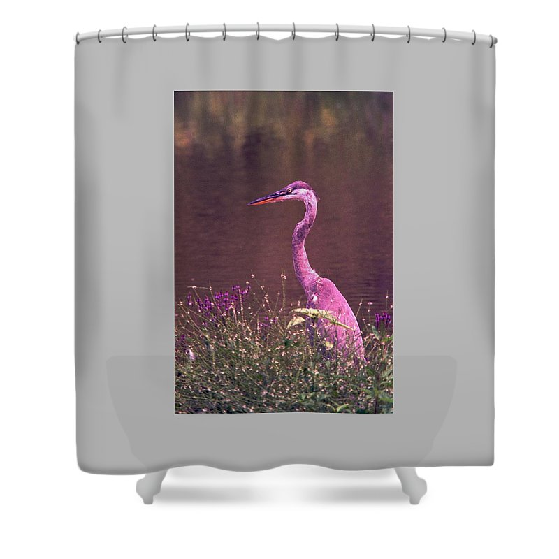 Great Blue Heron Shower Curtain featuring the photograph 080706-12 by Mike Davis