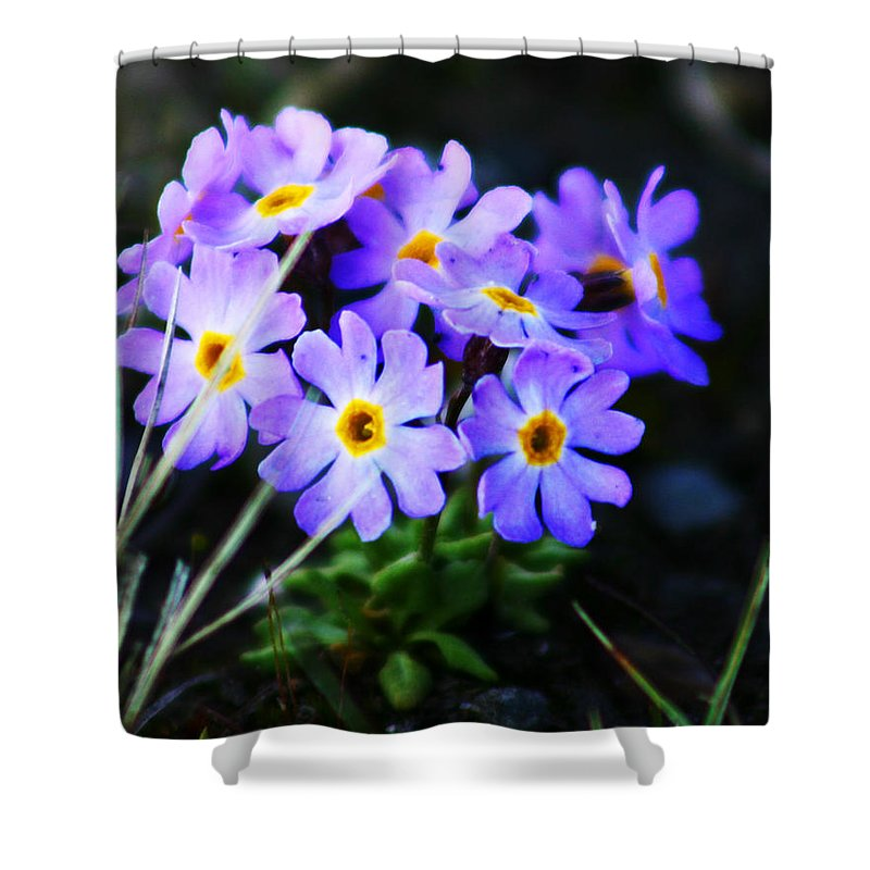 Flowers Shower Curtain featuring the photograph Alaskan Wild Flowers by Anthony Jones